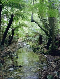 An Australian rain forest Creek.