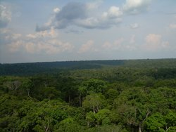 Intact Amazon forest near Manaus. (Source: Philip M. Fearnside)
