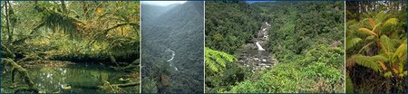 From left: Olympic Peninsula rain forest, Washington; Patria River, Costa Rica; Ranomafana National Park, Madagascar; Hawaiian forest. (Source: <a  data-cke-saved-href='http://www.ucmp.berkeley.edu/index.php' href='http://www.ucmp.berkeley.edu/index.php' class='external text' title='http://www.ucmp.berkeley.edu/index.php' rel='nofollow'>University of California Museum of Paleontology</a>)