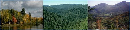 From left: Wisconsin woods; a forest along California's north coast; the forested hills of the Adirondacks, New York. (Source: <a  data-cke-saved-href='http://www.ucmp.berkeley.edu/index.php' href='http://www.ucmp.berkeley.edu/index.php' class='external text' title='http://www.ucmp.berkeley.edu/index.php' rel='nofollow'>University of California Museum of Paleontology</a>)