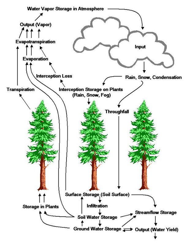 Figure 2: Hydrologic Cycle