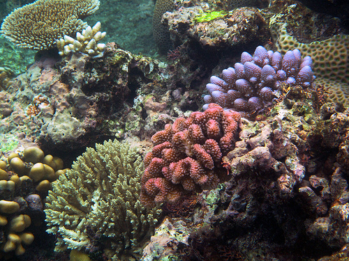 A medley of coral. Source: Steve Evans