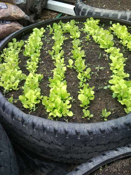 Temperate climate permaculture recycling tires in our - Planters made from old tires ...